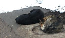 Безнадзорных животных вывозить за пределы Ижевска точно не будут
