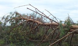 Депутат из Удмуртии  незаконно вырубил лес на 4,5 млн рублей