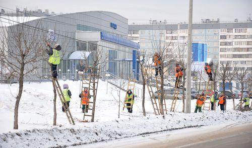 Фотофакт: коммунальщики Ижевска взобрались на деревья
