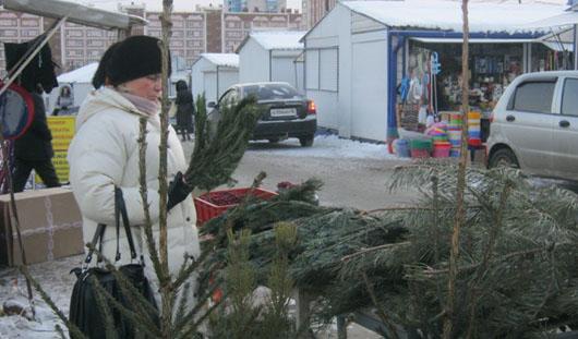 В Ижевске начали продавать настоящие елки