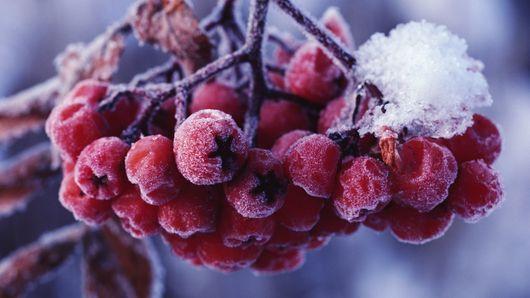 Похолодание ждет жителей Удмуртии в новогодние праздники