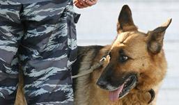 Тайник с героином нашла полицейская собака в Удмуртии