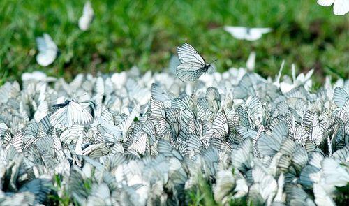 Фотофакт: фото бабочек из Удмуртии попало в журнал «National Geographic Россия»