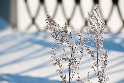 «Морозный звонок» и «позеленевшие» светофоры: о чем сегодня утром говорят в Ижевске