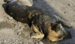 Житель Удмуртии украл и съел охотничью собаку