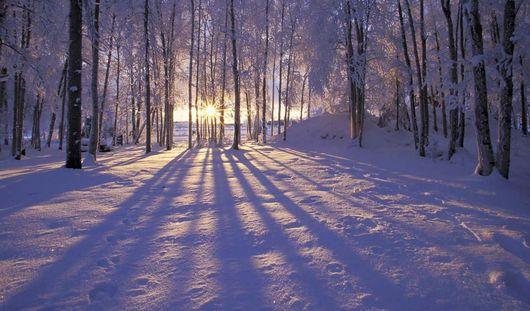 «Снежный сад» создадут ижевчане своими руками