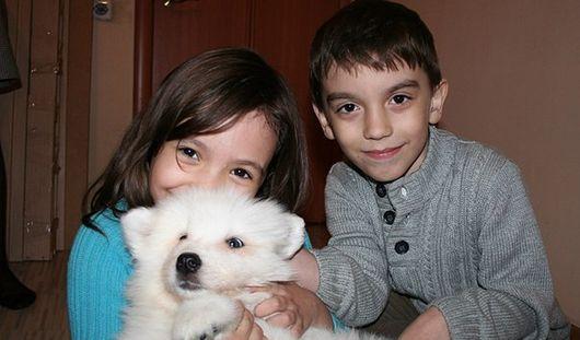 Пользователи соцсети помогли детям получить собаку за 100 тысяч «лайков»