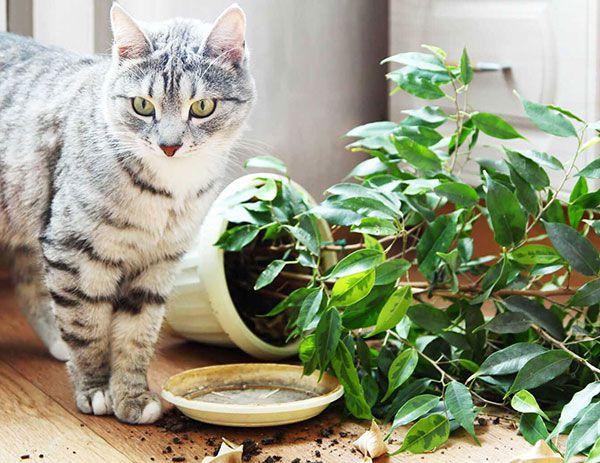 Корм для кошек Josera. Товары и услуги компании Интернет