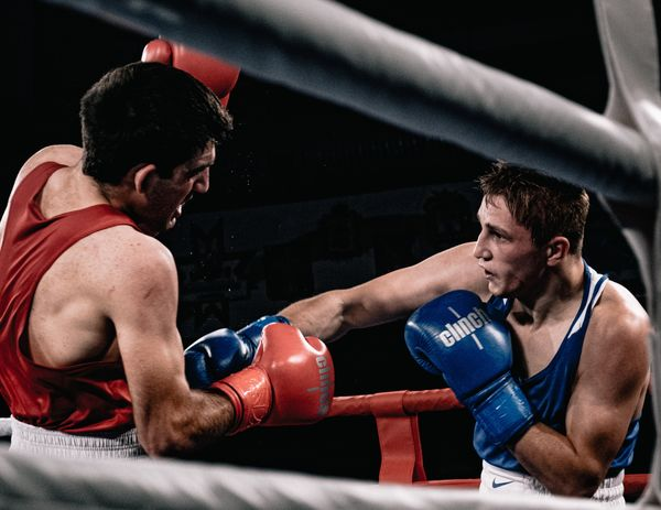 Кубок по боксу фото